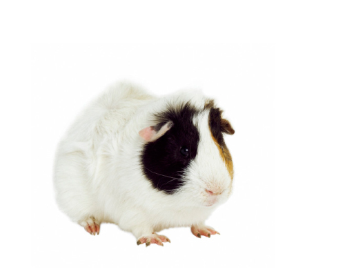 FS1183: Common Mites of Your Rabbit and Small Animal Part I