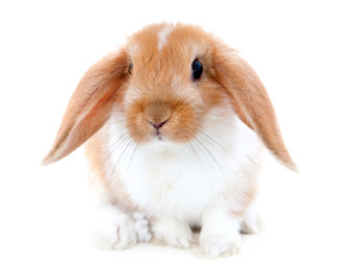 FS1183: Common Mites of Your Rabbit and Small Animal Part I: Fur