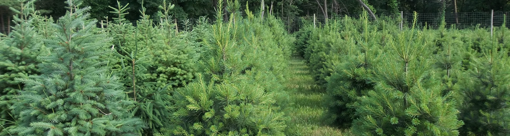 FS1187: Soil Fertility Recommendations for Christmas Trees