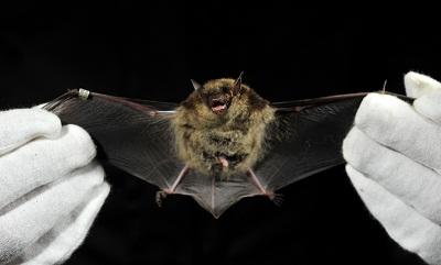 Bats In New Jersey