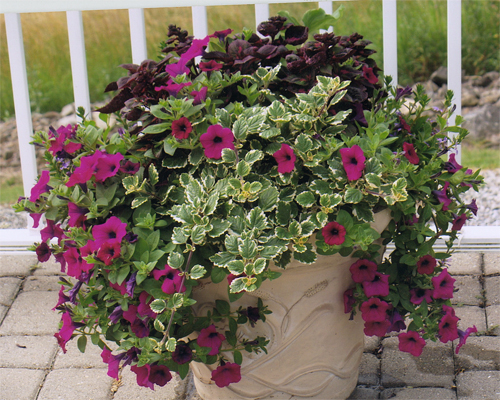 FS1215: Outdoor Container Gardening with Flowering and Foliage ... on rock gardens designs, dish gardens designs, pinch pot designs, patio pot designs, garden planters designs, garden gate designs, indoor garden designs, stone gardens designs, potted vegetable garden designs, water garden designs, garden trellis designs, herb gardens designs, potted plant designs, flower pot designs, flower garden designs, pot people designs, box gardens designs, container gardens designs, diy garden designs, mosaic pots designs,