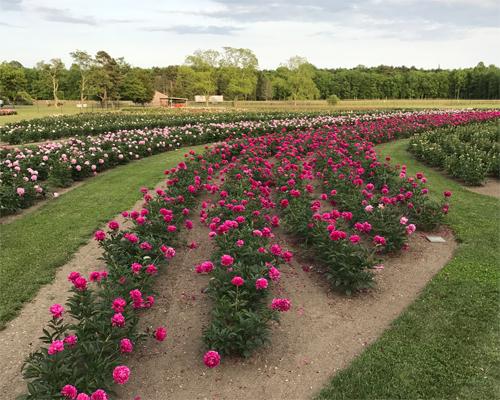 FS1275 UltraNiche Crop Series Mixed Cut Flowers for Small Farms – Cut Flower Garden Plan