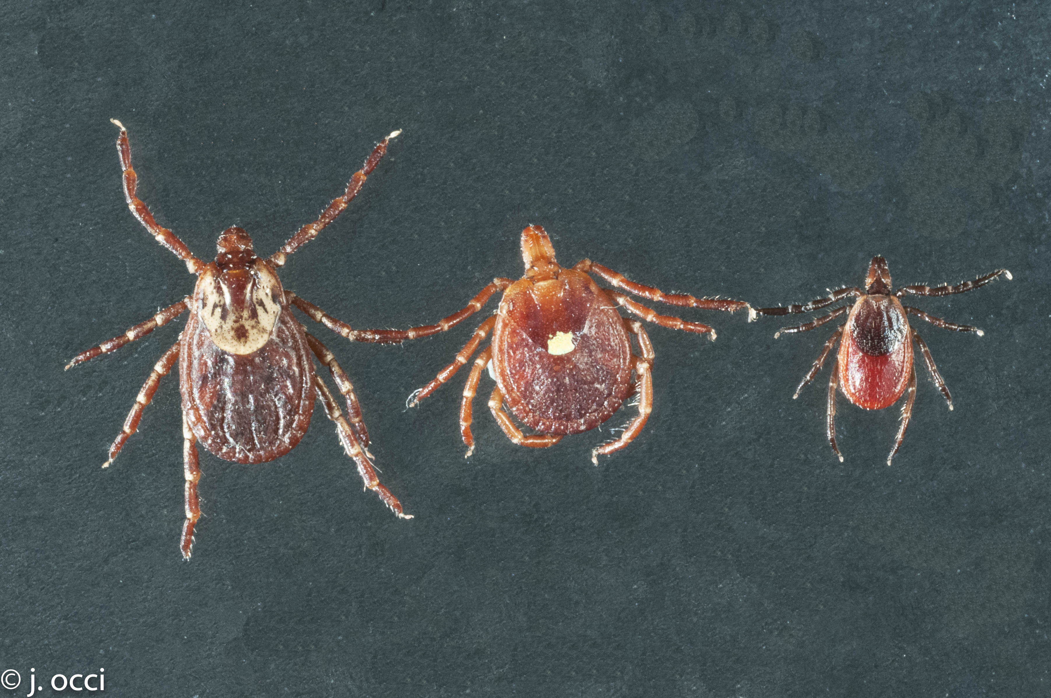 how to kill ticks on dogs