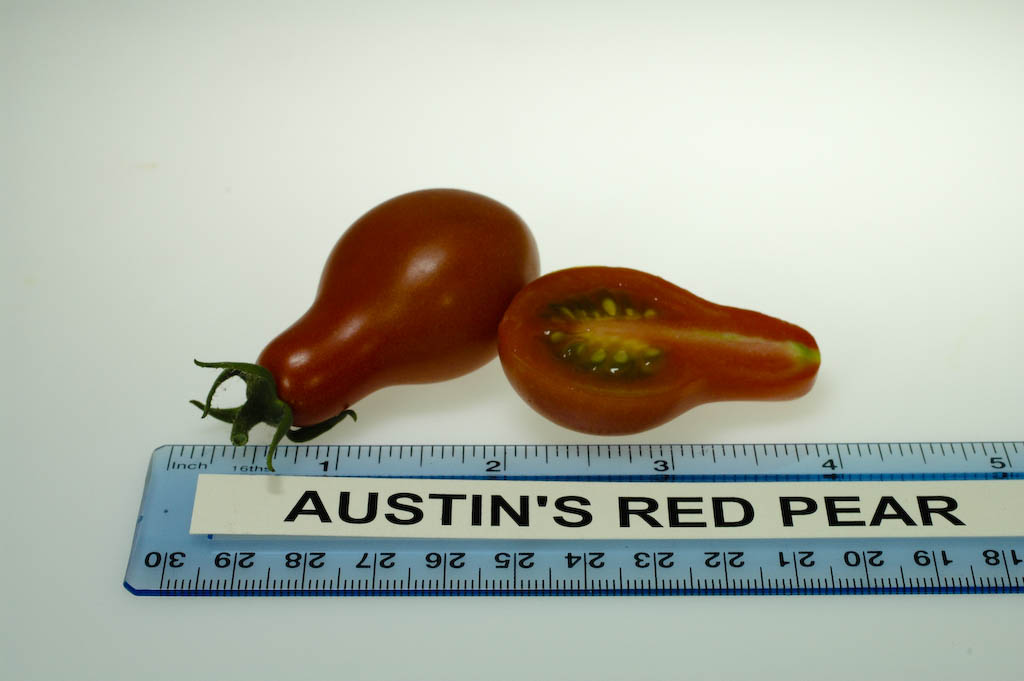 Austin S Red Pear Rutgers Njaes