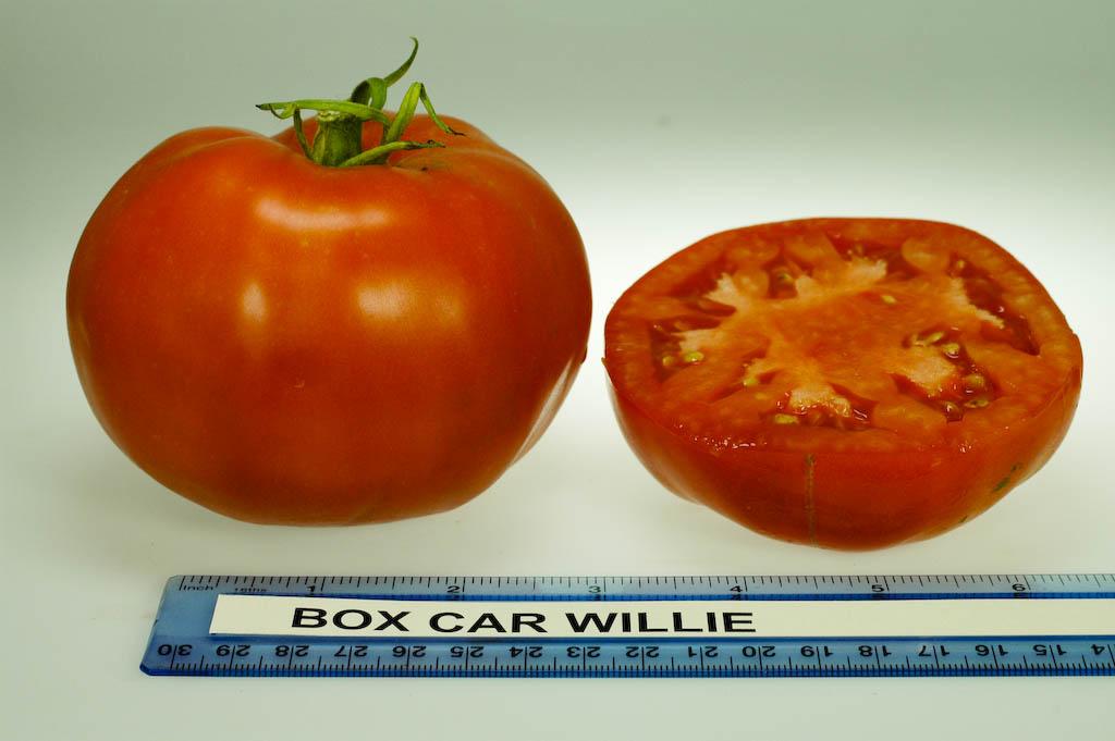 Tomato Bella Rosa    100 seeds