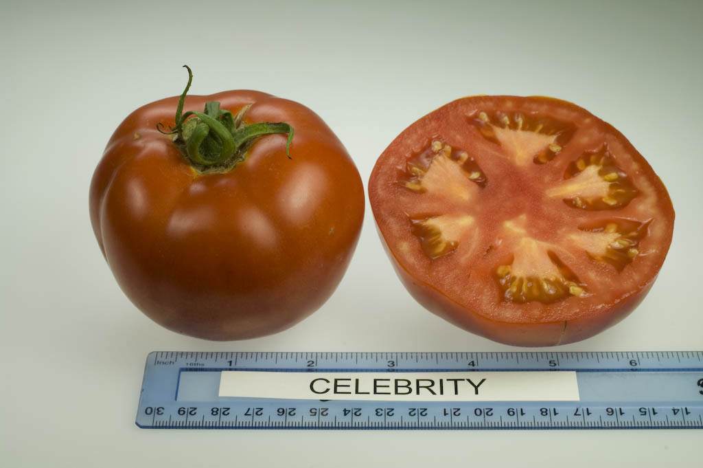 Better Bush Tomato: Compact Plants, Good Size Fruit