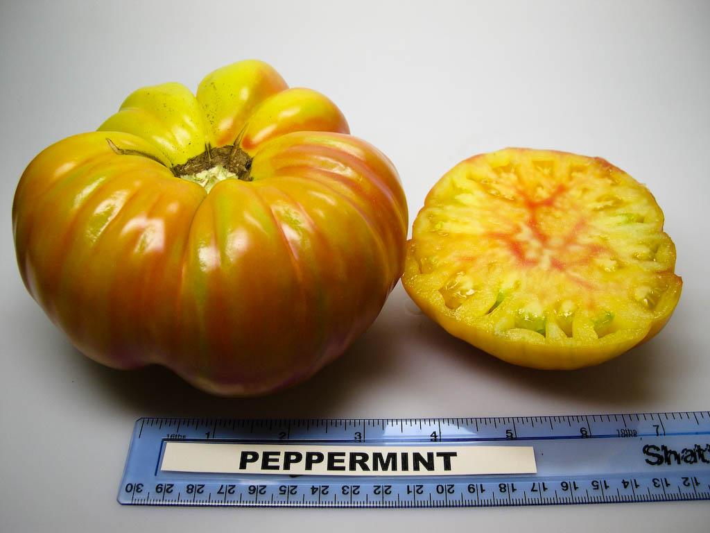 Peppermint (Rutgers NJAES)