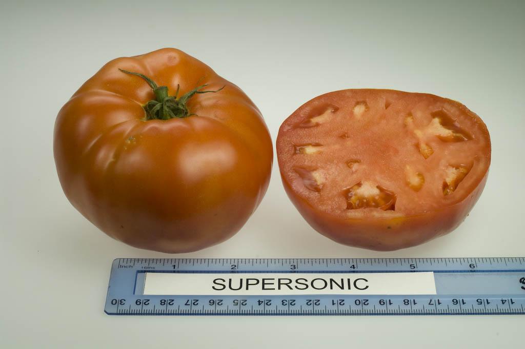 America's Best Tomato Varieties - Organic Gardening ...