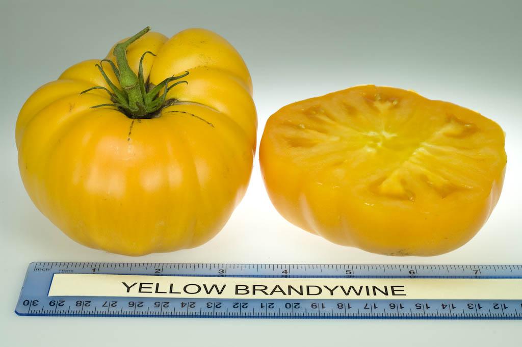 Yellow Brandywine (Rutgers NJAES)