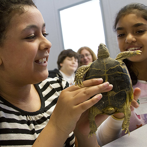 Photo: two girls inspecting a turtle.
